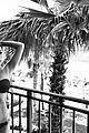 janel parrish bikini turks caicos vacation 20