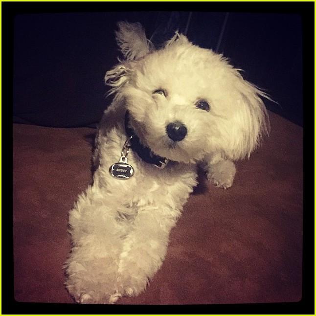 Demi Lovato S Dog Buddy Has Died Photo 844310 Celebrity Pets Demi Lovato Wilmer Valderrama Pictures Just Jared Jr