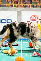 what is the puppy bowl 08