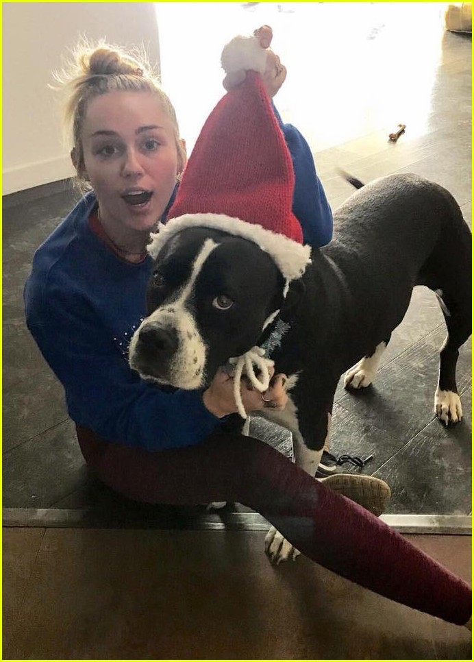 miley cyrus is celebrating christmas with her siblings pets 05
