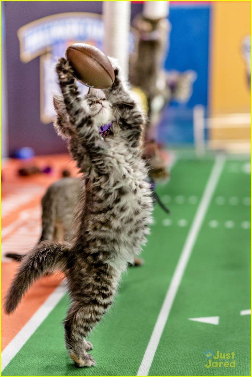 Kitten Bowl V Is Here Here S How You Can Watch Photo 1137330 Kitten Bowl Superbowl Pictures Just Jared Jr