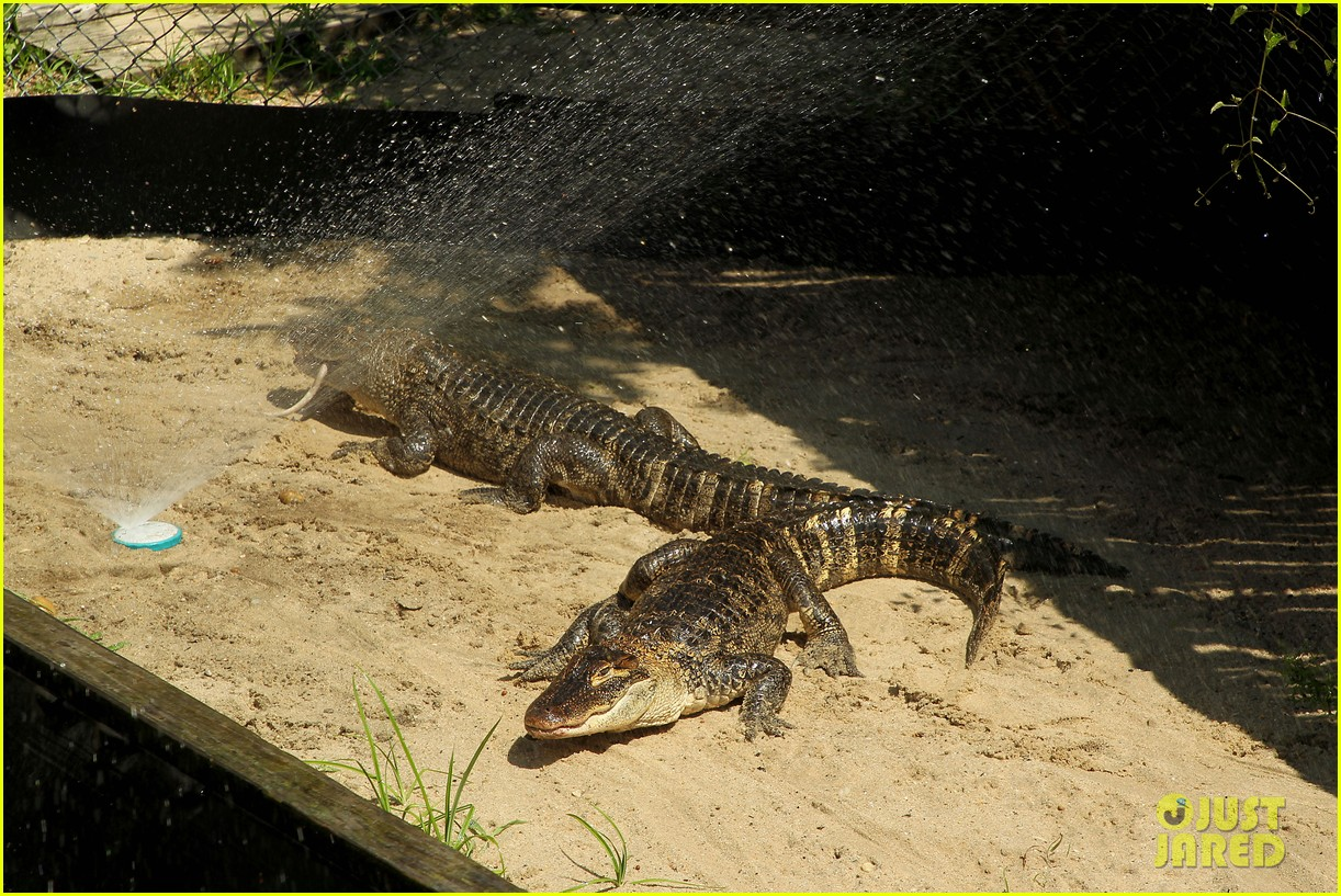 kaya scodelario crawl alligator event 05