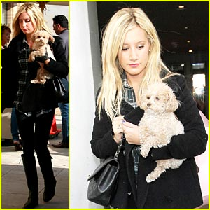 Ashley Tisdale Pampers Pooch Maui
