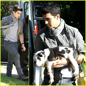 Joe Jonas' Puppy Love