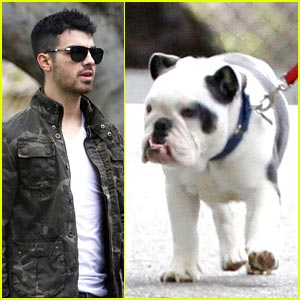 Joe Jonas Takes Winston For A Walk