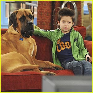 Davis Cleveland: Dog Watcher!
