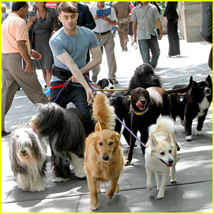Daniel Radcliffe Walks Multiple Dogs While Filming 'Trainwreck' in Bryant Park!