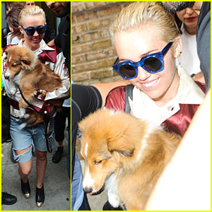 Miley Cyrus' Puppy Emu Puts A Smile On Her Face