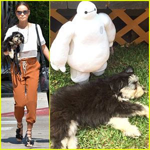 Jamie Chung's Pup Ewok Gets Medical Assistance From Baymax - See The Cute Pic!