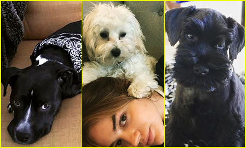 The 10 Cutest Celebrity Dogs -- Ranked