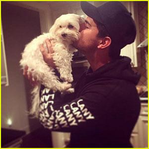 Taylor Lautner Pens Heartfelt Tribute After Death of Dog Roxy