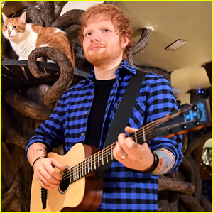 Ed Sheeran Wax Figure Unveiled at a Cat Cafe in England!
