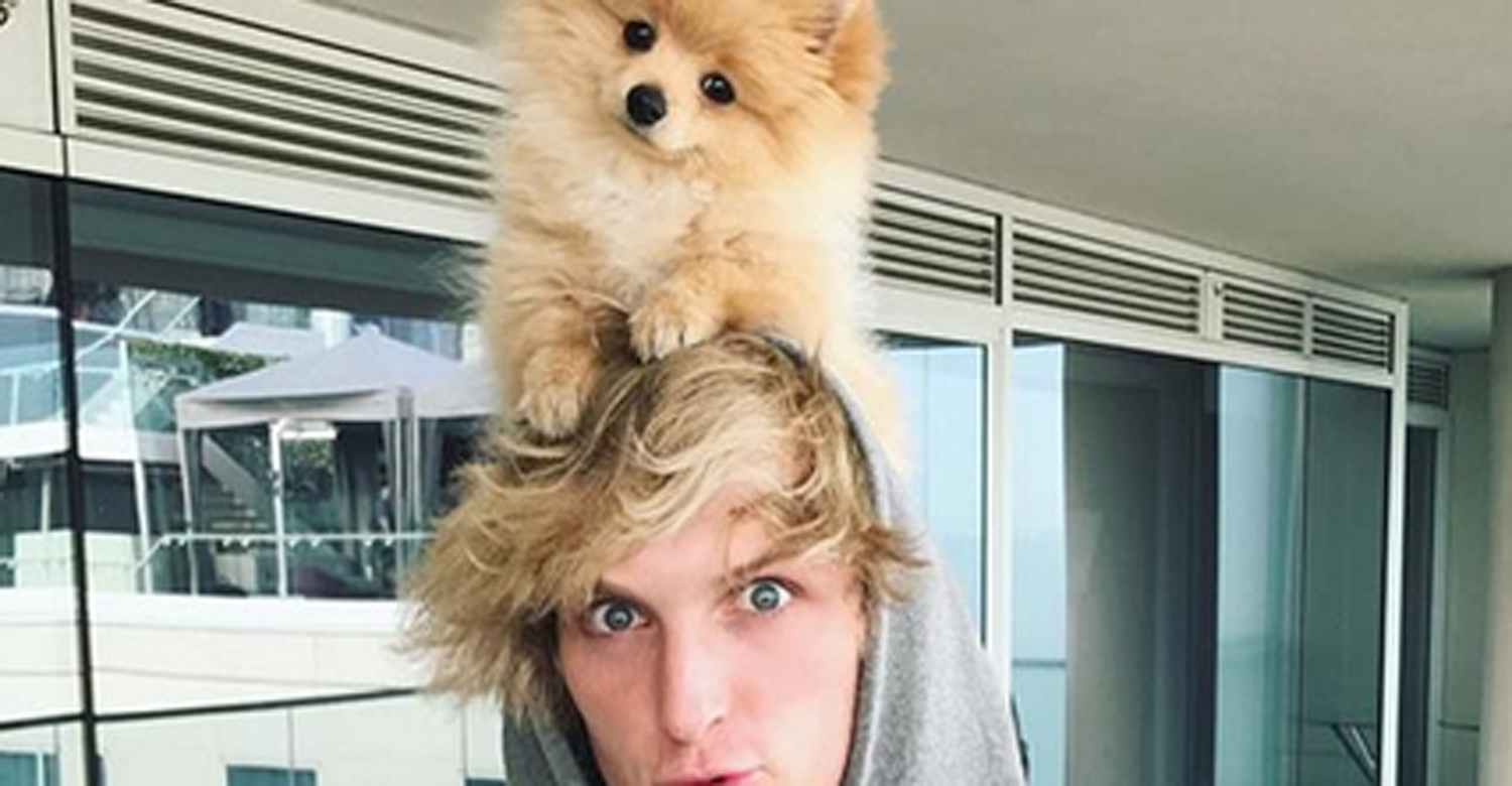Logan Paul S Beloved Dog Kong Killed By A Coyote