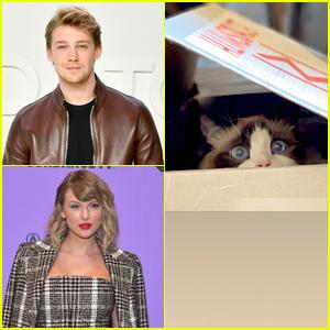 Taylor Swift's Boyfriend Joe Alwyn Shares Cute New Pics of Her Cat, Benjamin Button