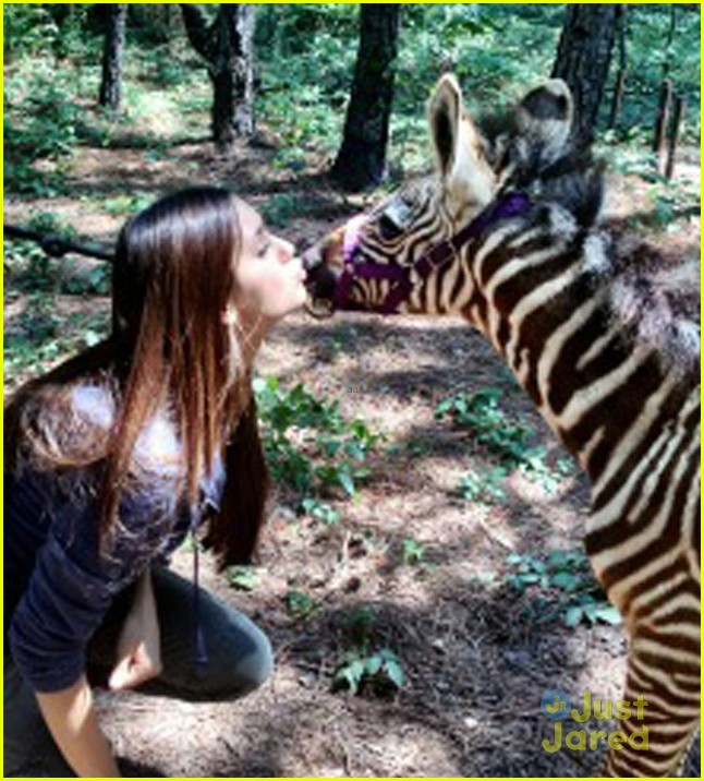dobrev zebra kisses 05